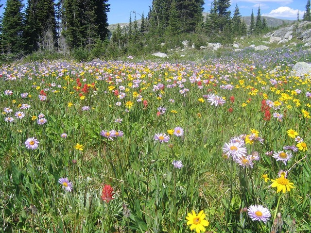 Wildflowers mountain trophy, nature landscapes.