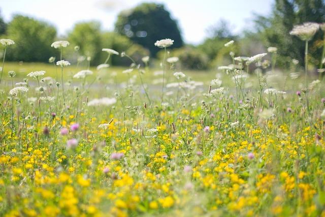 Wildflowers yellow flower field.