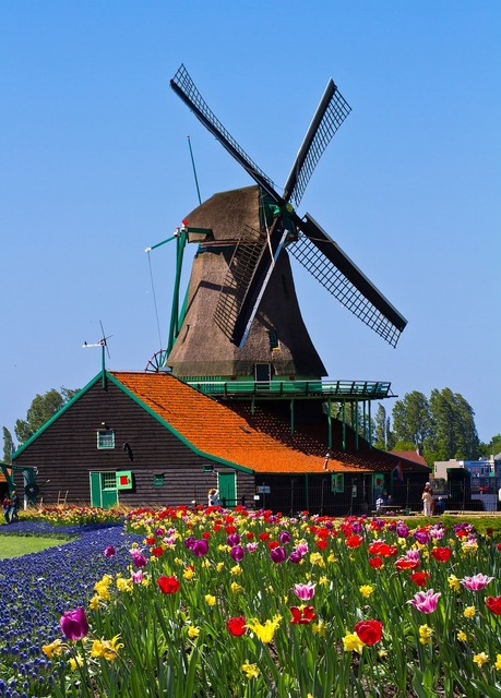 Windmill netherlands garden.