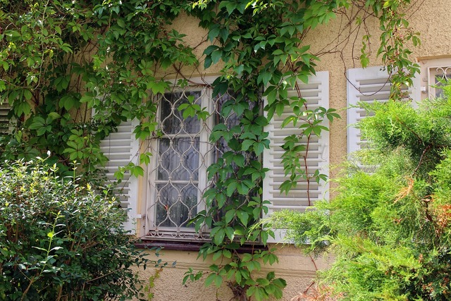 Window ivy wine partner, nature landscapes.