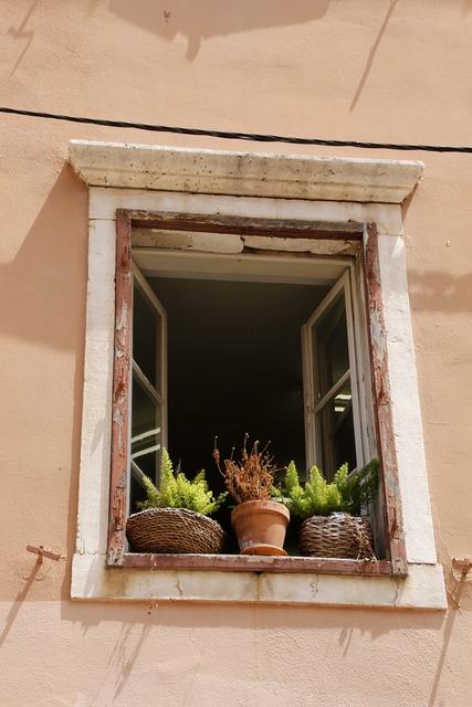 Window plant old, nature landscapes.