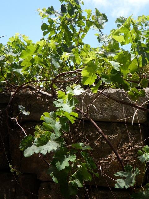 Wine wild wine partner.