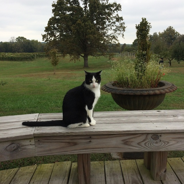 Winery kentucky cat, animals.