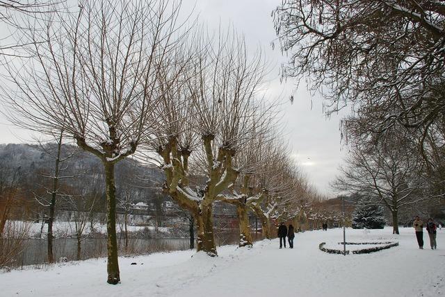 Winter trees saarbrücken.