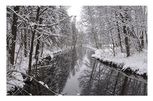 Wintry trees river.