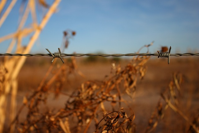 Wire barbed wire field.