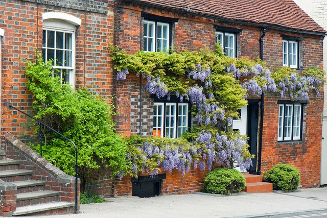 Wisteria house covered, architecture buildings.