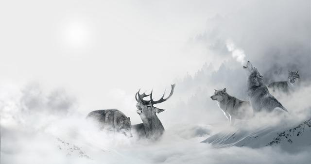 Wolf wolves hirsch, nature landscapes.