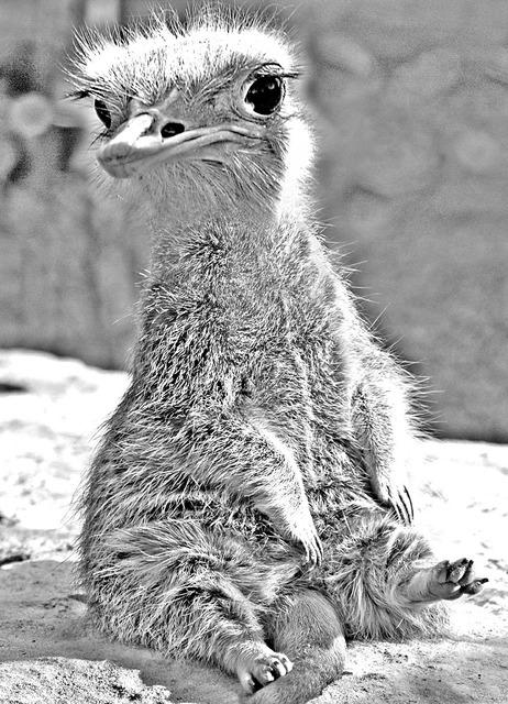 Wolperdinger animal photo montage, animals.