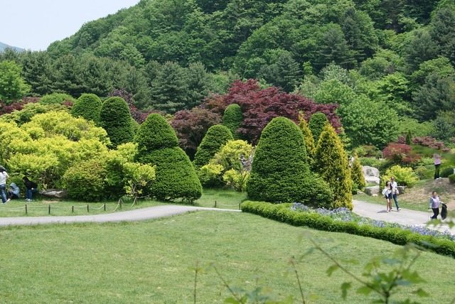 Wood a flower garden plantation.