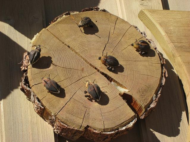 Wood beetle deco.
