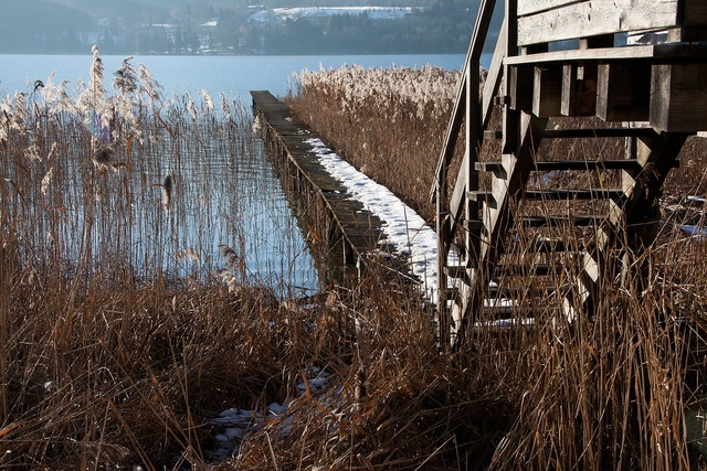 Wood stairs web boardwalk, nature landscapes.