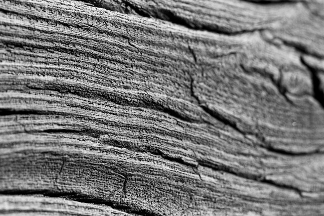 Wood structure texture, backgrounds textures.