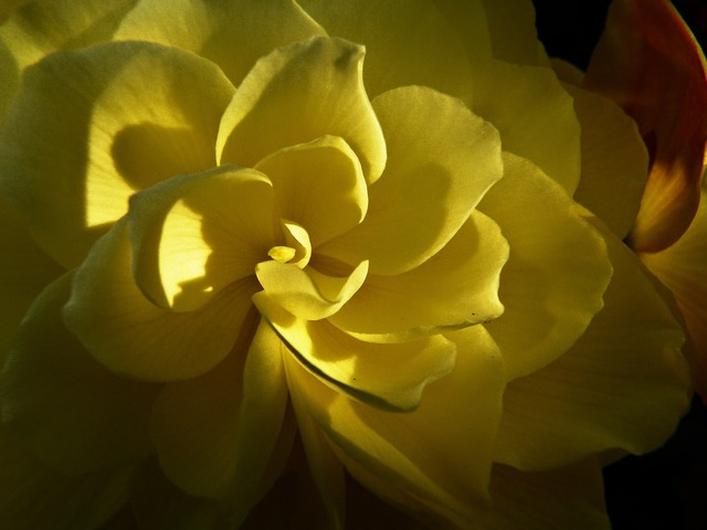 Yellow flower garden, nature landscapes.