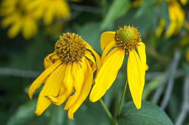 Yellow flowers green.
