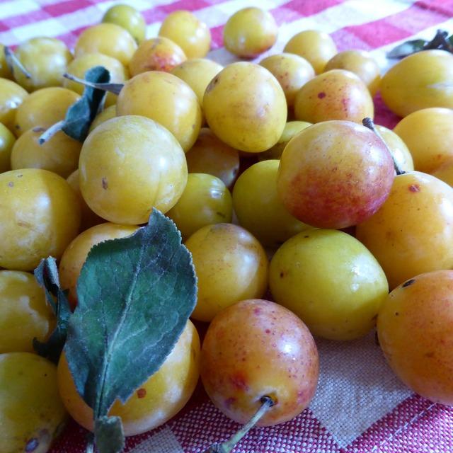 Yellow plums fruit vitamins, food drink.