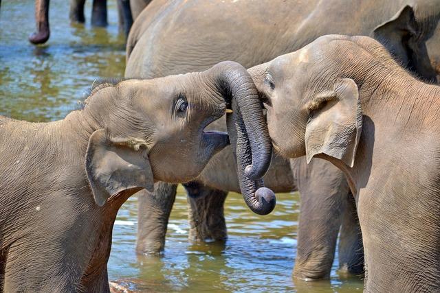 Young elephants baby elephants orphan elephants.