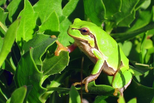 Żabka the frog animals, nature landscapes.