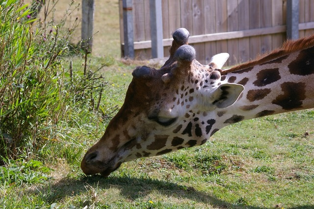 Zoo animals giraffe, nature landscapes.