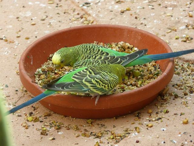 Zoo birds plumage.